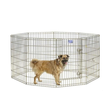Gold Zinc Exercise Pen - 36