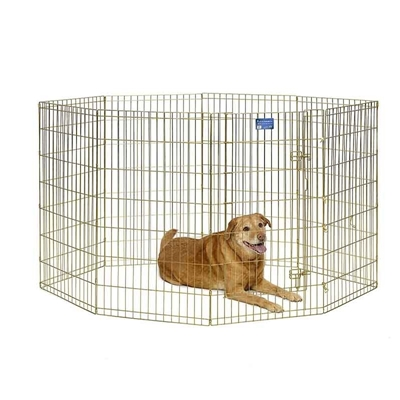 Gold Zinc Exercise Pen - 42