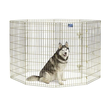 Gold Zinc Exercise Pen - 48