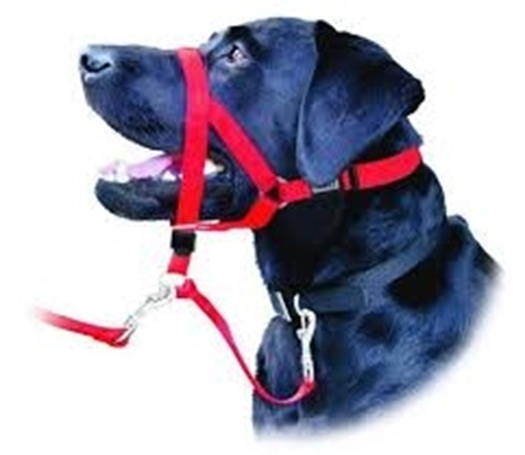 Picture for category Training Collars/ Head Halters